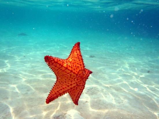 c1f5dba762ec4b65d98eb6f320b1419b-star-ocean-falling-stars